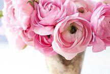 Flowers/Kukkia