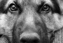 Woof.