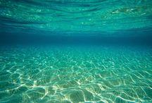 Under the Sea / by Martha Coye