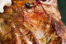 【生物】甲殻類