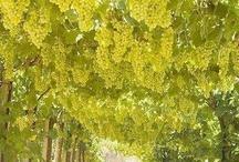 """Plants  / """" Waktu terbaik untuk menanam pohon adalah kemarin, Menanam pohon hari ini tidak berarti sudah terlambat """" -read somewhere. Mari menanam pohon :D"""