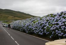 Places Known For Hydrangeas