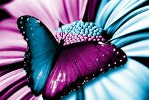 Butterfly maniac :)