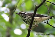 bird / by Carolyn Odell