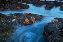 Sea Photos / by Kirsten Parris