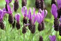Garden Glory / Beautiful garden aspects