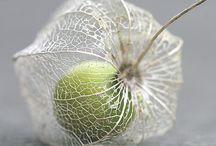 Pods / Seeds / Interesting Dried plant material / by Diana Cantrell-Brown