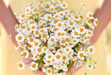 Wedding: The Bouquet / wedding bouquet flowers
