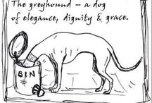 Norty Greyhounds