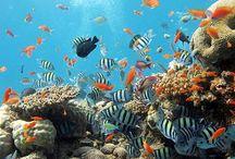 Maldives / Best diving ever
