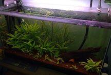 aquarium.tr