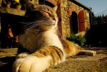 Kitties / by Chris Liubicich