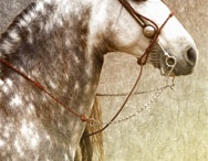 Equine (2) / by 4Wits-End ..Art for the Romantic Heart