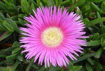 Flores / Colorido de diversas flores