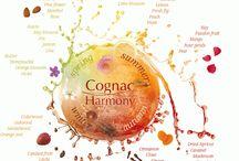 Dégustation Cognac / Une galerie d'infographies sur le Cognac pour apprendre à le déguster avec Délices d'initiés : école de dégustation de produits terroir basée à Valence (Drôme - 26)