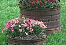 Aysun's Garden / Çiçek-renk-hayat
