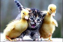 Animal Love! / Animal Love!