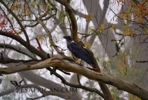 Birds in Malawi / All about the huge variety of birds in Malawi.