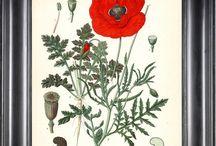 Botanic invite / Ideas for stationery