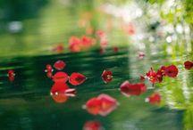 bach virágok