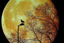 luna / by izabella szuromi