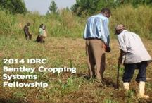 2014 IDRC Bentley Cropping Systems Fellowship & Other Top Scholarships / 2014 IDRC Bentley Cropping Systems Fellowship Program for Canadian or citizen of a developing Countries , and applications are submitted till October 1, 2014. IDRC offers Bentley Cropping Systems Fellowship Program to a Canadian, permanent resident of Canada or citizen of a developing country.