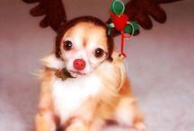 Soooo freaking adorable!!!!