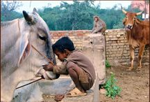 Incredible India! / by Michael Aram