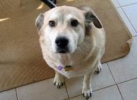 Como treinar um cão / Dicas e informações preciosas sobre adestramento de cachorros.