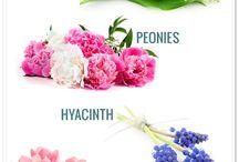 Flowers {Seasons}