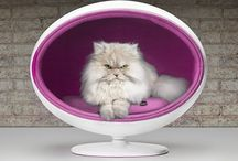 Luxury Pet Furniture / Luxury cat beds, luxury dog beds, cool cat beds