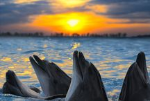 Dolphins!!Sweet