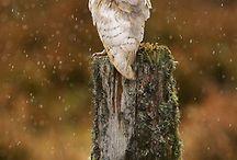 Animal love  / by Sandra Emilie