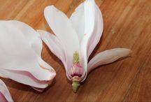 Gezondheid van bloemen en planten