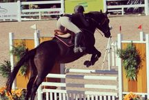 Equestrianism  / What I do and love the most.