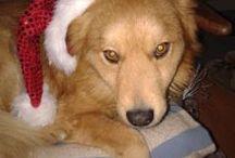 ღBobiღ / Môj krásny psíček Bobi