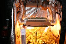 Homegrow solutions / Homegrow solutions // Growrooms private size