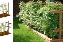 Zahrada / Praktické