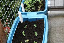 Gardening / Ideas