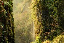 Landscape-Forest