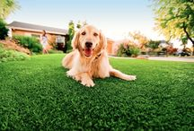 Pet Turf Solutions