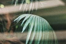 plantefilm