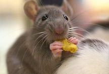 Ratos e camundongos / Topos, mouses