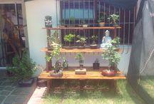 My own bonsais / My own bonsais
