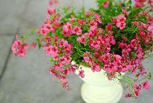 Entretien des plantes sur balcon