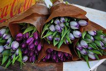 Flowers / by Jennifer Newman