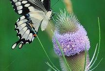 kelebekli cicek