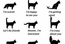 Facts of Cats