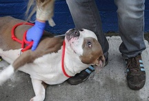 Urgent Pets for Adoption
