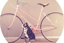 City steed / Bikes!